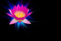 Pink lotus flowers with sparkling blue light isolated on black background Stock Images