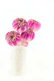 Pink lotus flowers in vase isolated on white Royalty Free Stock Photo