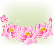 Pink lotus flowers. Vector illustration Royalty Free Stock Photo