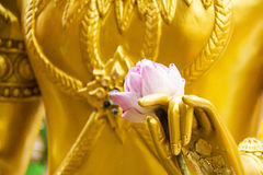 Pink lotus on a hand of golden statue. In religious life Stock Photography