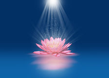 Pink lotus with light beams. Pink lotus floating on water with light beams Stock Images