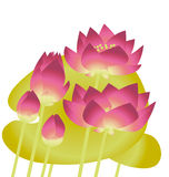 Pink lotus lilies with leaves. Stock Images