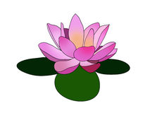 Pink lotus / Lilly flower on three green leaves logo design illustration.  Royalty Free Stock Photo