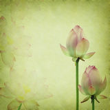 Pink lotus on the old grunge paper Royalty Free Stock Images