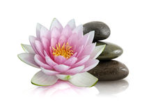 Pink Lotus and Polished Stones Stock Images