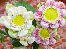 Pink lotus for pray buddha Royalty Free Stock Image