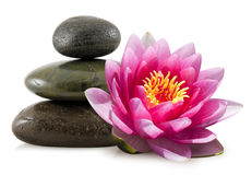Pink Lotus and Spa Stones Stock Image
