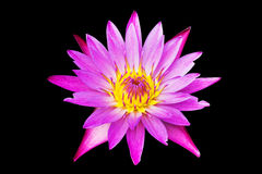Pink lotus water lily blooming isolated on black background Stock Photo
