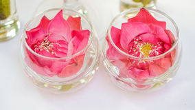 Pink lotus, water lily decorate in glass. Modern style theme for Stock Photos