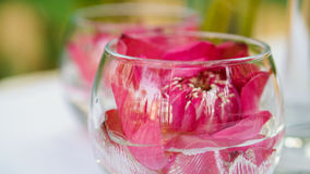 Pink lotus, water lily decorate in glass. Modern style theme for Stock Image