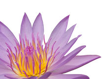 Pink lotus on the white background, isolated with Stock Photography