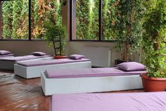 Pink loungers in the Spa. Chaise loungers indoor. Relax time. Healthy lifestyle. SPA zone. indoor plants and big windows royalty free stock photos