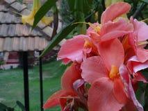 Pink love. Beautiful Resort Garden Royalty Free Stock Images