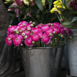 Pink lupin for sale. persian buttercup flowers (ranunculus) Royalty Free Stock Images