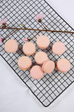 Pink macarons on baking tray Stock Photo