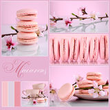 Pink Macarons Collage with vintage shabby chic theme. And spring blossoms with sample text and color swatches Stock Image