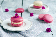 Pink macarons with vanilia cream Stock Photos