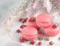Pink macaroons on a vintage plate and dried flower buds. Pastel stock images