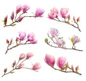 Pink magnolia Royalty Free Stock Images