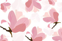 Pink magnolia flower vector background Stock Images