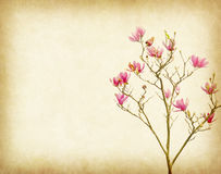 Pink magnolia flowers on old paper. Background Royalty Free Stock Image