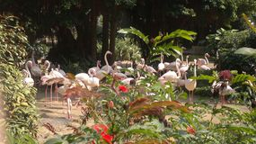 Pink flamingos in the public city park in Hong Kong stock photo