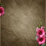 Pink mallow on retro background Stock Images