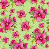 Pink malva flowers with green buds and leaves on light green background. Seamless floral pattern. Watercolor painting. Pink malva flowers with green buds and Royalty Free Stock Images