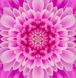 Pink Mandala  Concentric Flower Center Kaleidoscope Royalty Free Stock Photography