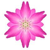 Pink Mandala Flower Ornament Kaleidoscope Pattern Isolated Stock Photo