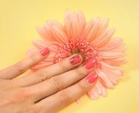Pink manicure Stock Photos