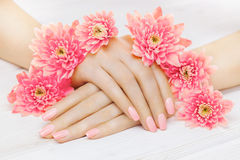 Pink manicure with chrysanthemum flowers. spa Stock Photography