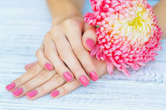 Pink manicure and daisy flower royalty free stock images