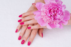 Pink manicure and a flower royalty free stock photography