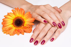 Pink manicure and orange flower Royalty Free Stock Photography