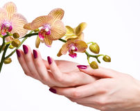 Pink manicure and orchid Stock Photo
