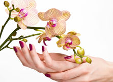 Pink manicure and orchid stock images