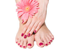 Pink manicure and pedicure with flower Stock Images