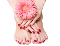 Pink manicure, pedicure and flower. Woman hands and feet with bright pink manicure and pedicure holding delicate flower royalty free stock photo