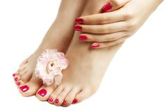 The pink manicure and pedicure with flower close-up, on white background. A pink manicure and pedicure with flower close up, on white background stock image