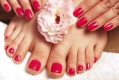 Pink manicure and pedicure with flower close-up on white background, top view. Pink manicure and pedicure with flower close up on a white background, top view stock image