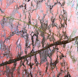 Pink Marble texture Stock Images