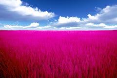 Pink Meadow Stock Photos