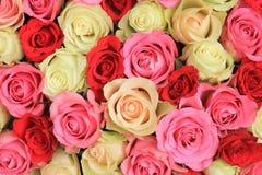 Pink mixed wedding roses Stock Photo