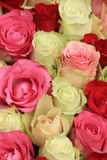 Pink mixed wedding roses Royalty Free Stock Photography