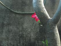 Shy pink flower hinding behide the tree. stock photos
