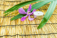 Pink mokara orchids with green leaf and tea light on bamboo back Royalty Free Stock Photography