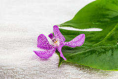 Pink mokara orchids and green leaf on white towel Stock Images