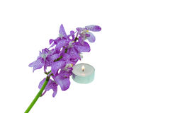 Pink mokara orchids with Tea light  isolated on white background Stock Photos