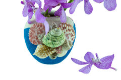 Pink mokara orchids in vase decorated with sea shells. Isolated Stock Images